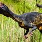 Fototapeta dinozaur w trawach fp 2977