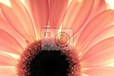 Fototapeta kwiat zbliżenie, światło z tyłu