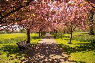 Fototapeta na ścianę park pełen kwitnących drzew fp 5075