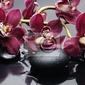 Obraz oddział terapii czerwony orchidea z kamieni
