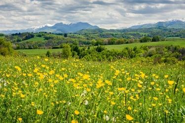 Łąka pełna kwiatów pireneje - plakat premium wymiar do wyboru: 84,1x59,4 cm