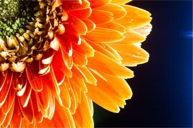 Fototapeta kwiat 98