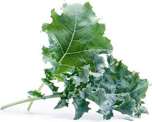 Wkład nasienny lingot warzywa liściowe jarmuż