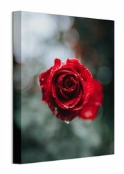 Lush Rose - obraz na płótnie