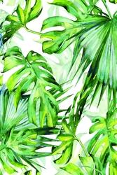 Tropikalne liście - plakat wymiar do wyboru: 61x91,5 cm