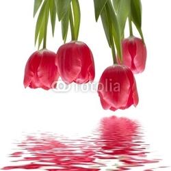 Fotoboard na płycie izolowane tulipany obrócone.