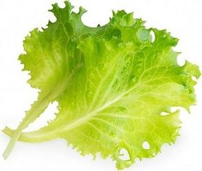 Wkład nasienny Lingot warzywa liściowe sałata masłowa
