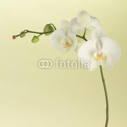 Obraz na płótnie canvas dwuczęściowy dyptyk biała orchidea