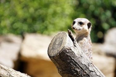 Fototapeta zwierzęta w zoo fp 2611