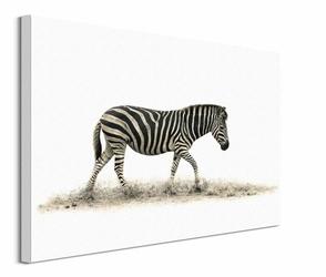 The Zebra - obraz na płótnie