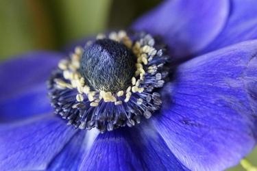 Fototapeta kwiat 325