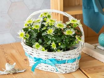 Koszyczek wiklinowy ozdobny na wiosenne kwiaty biały z niebieską wstążką altom design 32 cm