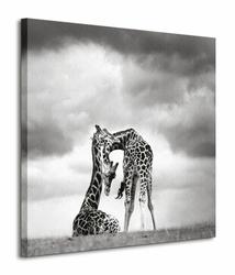 Tenderness - Obraz na płótnie
