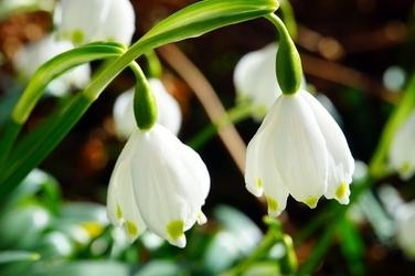 Fototapeta na ścianę małe białe kwiatuszki fp 433