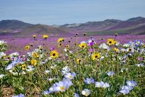 Fototapeta na ścianę wiosenna łąka obsypana kwiatami fp 1655