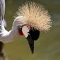 Fototapeta ptak patrzący do wody fp 2753