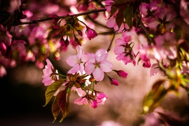 Wiosna w ogrodzie - plakat wymiar do wyboru: 100x70 cm