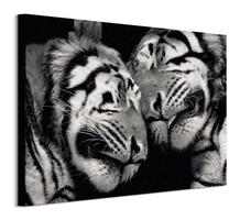 Sleeping tigers - obraz na płótnie