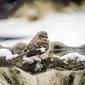 Fototapeta na ścianę ptak w zimie siedzący na fontannie fp 2993