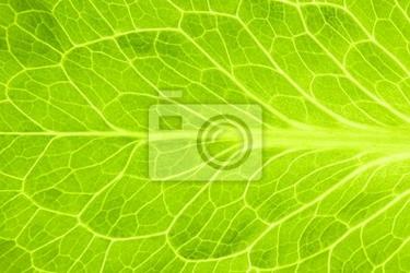 Naklejka świeżych zielonych liści sałaty  super makro