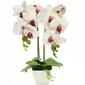 Sztuczny storczyk różowy kwiatek kwiat orchidea
