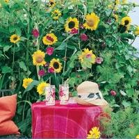 Kwitnący parkan – mix nasion – kiepenkerl
