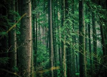 Tajemniczy las - fototapeta
