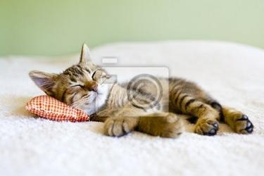 Fototapeta małe kitty