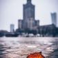 Warszawa pałac kultury i nauki jesienna impresja - plakat premium wymiar do wyboru: 70x100 cm