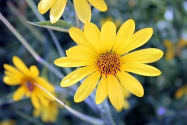 Fototapeta żółty kwiatek fp 673