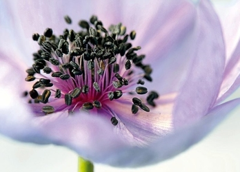Obraz kwiat p14