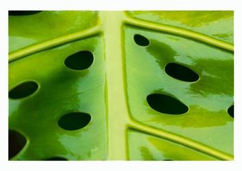 Dziurki w liściu - plakat wymiar do wyboru: 80x60 cm