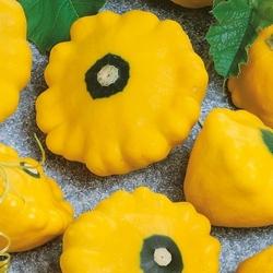 Patison sunburst – nasiona kiepenkerl