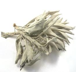 Biała szałwia susz 25 g