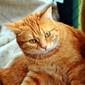 Fototapeta kot w kocu fp 2857