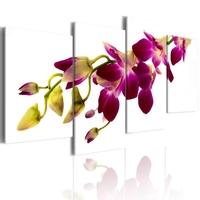 Obraz - blask orchidei