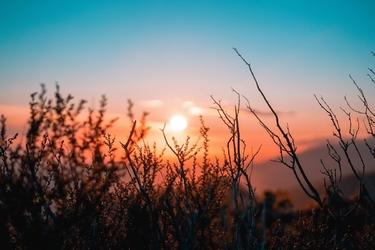 Fototapeta na ścianę rośliny na tle zachodu słońca fp 4990