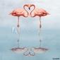 Obraz na płótnie canvas czteroczęściowy tetraptyk kochać się