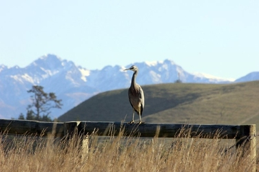 Fototapeta ptak siedzący na drewnianej barierce fp 2886