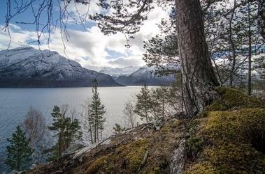 Fototapeta na ścianę sosna wyrastająca na skalistym brzegu jeziora fp 1428