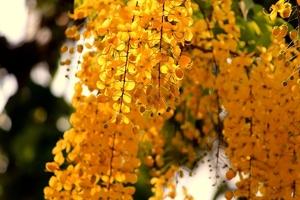 Fototapeta na ścianę jesienne kwiaty  fp 3321