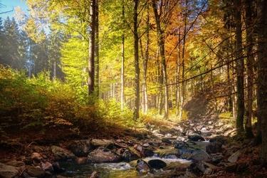 Fototapeta na ścianę wodospad w lesie fp 4058
