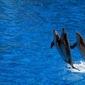 Fototapeta delfiny wyskakujące z wody fp 2980