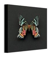 Kolorowy motyl - obraz na płótnie