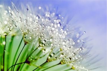 Fototapeta kwiaty 100