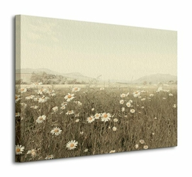 Field of Daisies - Obraz na płótnie