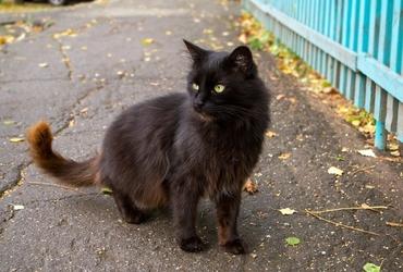 Fototapeta kot na drodze fp 2775