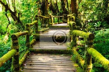 Fototapeta chodnik drewna