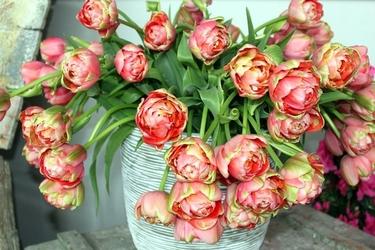 Fototapeta pełne tulipany w wazonie fp 331