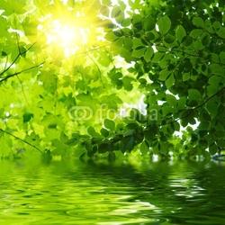 Obraz na płótnie canvas trzyczęściowy tryptyk zielone liście odbijające się w wodzie